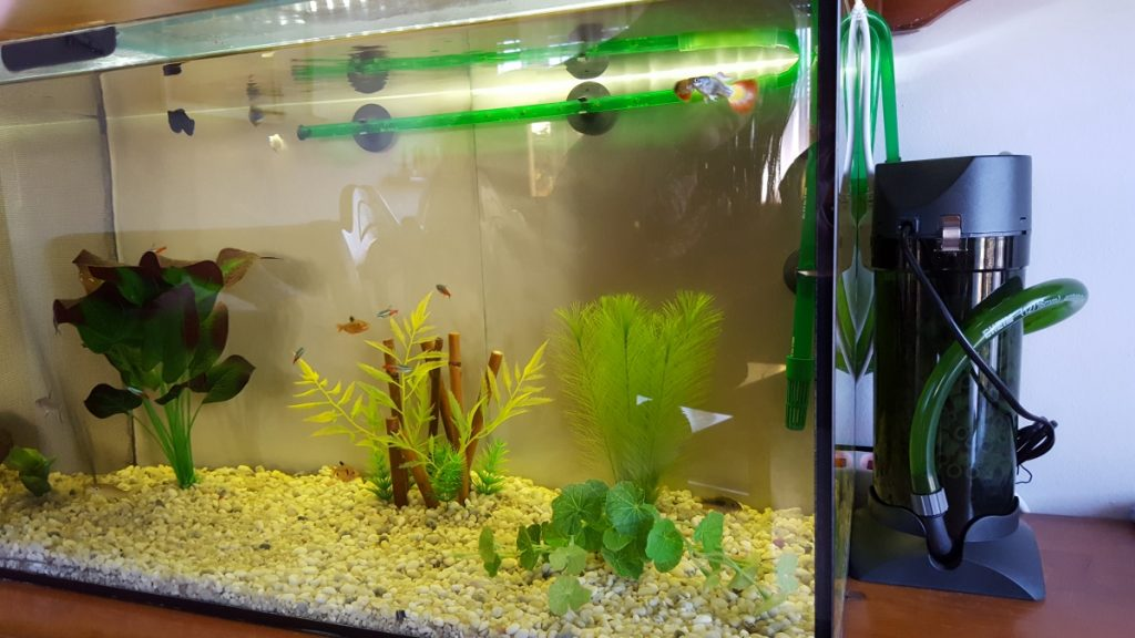 filtro acuario kiwoko