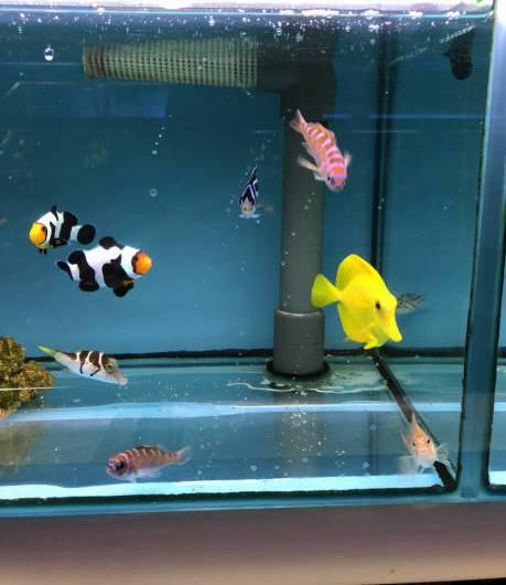 filtro acuario aliexpress