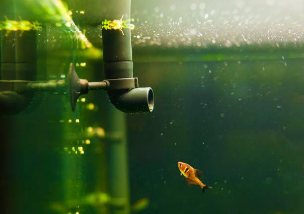 filtro acuario pequeño