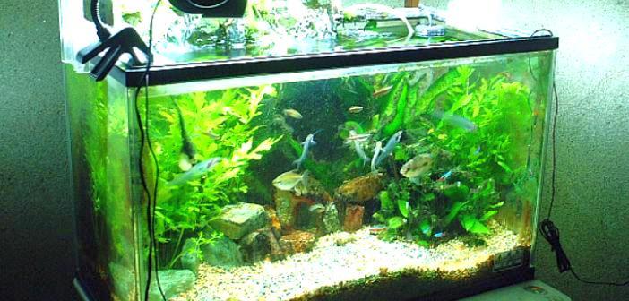 filtro acuario interno